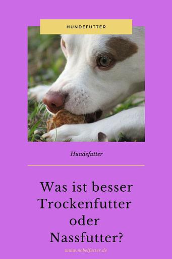 Pinterest Pin Hundefutter: Was ist besser Trockenfutter oder Nassfutter?