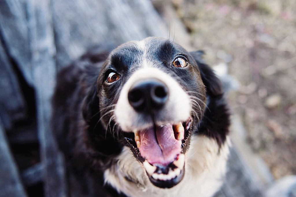 Hund freut sich auf Hundefutter