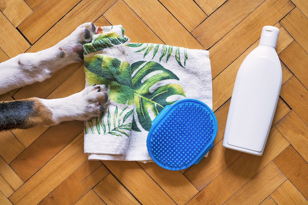Hund liegt auf Boden, neben ihm Handtuch, Bürste und Hundeshampoo gegen Hundegeruch.